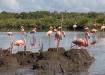 Andar Caguanes. Educación ambiental, manejo coherente y preservación del patrimonio convergen en la salvaguarda del Parque Nacional Caguanes, verdadero tesoro natural del norte espirituano.