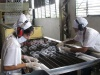 Electromecánica Escambray. La confección de vasos constituye actualmente uno de los renglones más avanzados de Electromecánica.