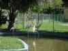 Un safari a lo cubano en las inmediaciones de Yaguajay. En la propia sede de la Unidad territorial de Flora y Fauna se encuentra un minizoológico al que pueden asistir los clientes cubanos y foráneos a disfrutar de especies como el cocodrilo, jutía conga, flamencos, iguanas y varias especies de aves.