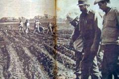 En múltiples ocasiones Fidel visitó las áreas del Plan Banao. (Foto: revista Bohemia)