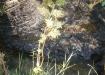 Huellas del derrame. Las orillas del arroyo se encuentran manchadas.