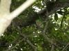 Colinas de natura. La Cartacuba, una de las riquezas vivas del parque.(Fotos: cortesía de la reserva)