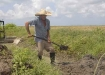 La región cuenta con envidiables condiciones naturales para el cultivo del arroz.