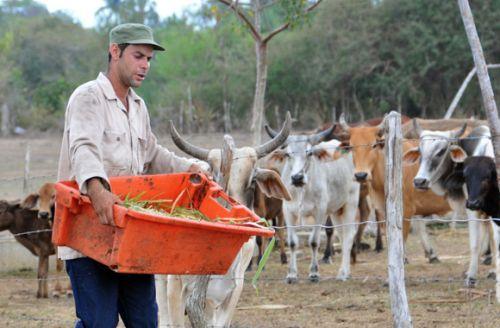 Millonario que sabe del trabajoso camino de la leche. Cooperativa de Créditos y Servicios Fortalecida (CCSF) Bienvenido Pardillo de Sancti Spíritus.