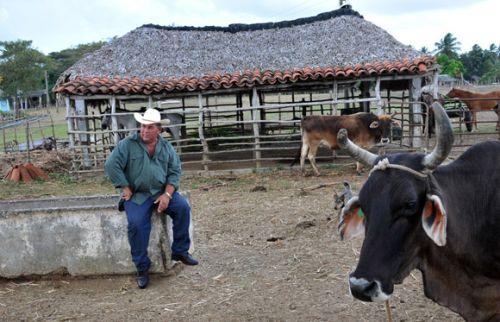 Millonario que sabe del trabajoso camino de la leche. Orlando Obregón Medinilla, presidente por más de trece años y mejor productor lechero de la Cooperativa de Créditos y Servicios Fortalecida (CCSF) Bienvenido Pardillo de Sancti Spíritus.