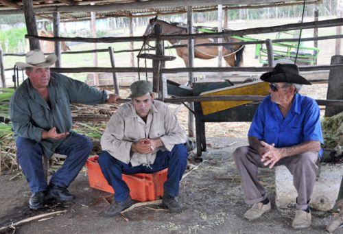 Millonario que sabe del trabajoso camino de la leche. Vaqueros de la Cooperativa de Créditos y Servicios Fortalecida (CCSF) Bienvenido Pardillo de Sancti Spíritus.