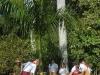Pioneros de Yaguajay mientras siembran una palma a propósito del