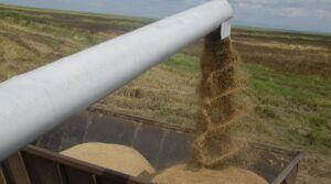 Sobresale Sancti Spíritus en la producción de arroz