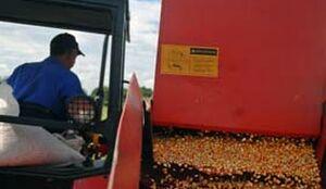 Decisivo aporte de Yaguajay en la entrega de granos