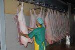 Empresa Porcina de Sancti Spíritus incrementa su producción