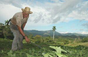 La agroecología se afianza en las montañas de Trinidad