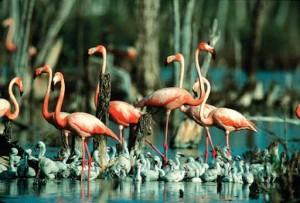 En el Parque Nacional Caguanes se llevan a cabo un grupo de proyectos encaminados a tener un inventario actualizado de la flora y la fauna