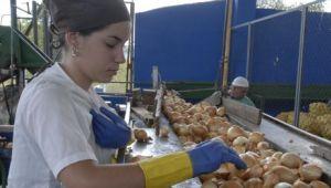 La línea para pulpa de cebolla aporta el 95 por ciento de la producción nacional.