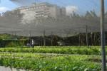 La permacultura busca el desarrollo local sostenible de sistemas urbanos y rurales.