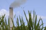 Las plantaciones deben aportar un crecimiento de alrededor del 18 por ciento.