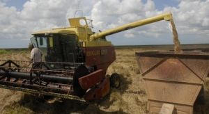 Este sector produce cerca del 80 por ciento del arroz que se cosecha en el país.
