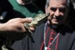 """El """"cocodrilo del Papa"""" llega este viernes a Cuba. (foto: Cubadebate)"""