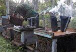 Cuba expondrá sus logros y defenderá la práctica de una apicultura sostenible.