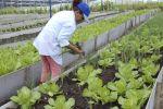 Cuba: Amplían entrega de tierras en usufructo