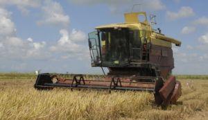 Este domingo se reanudó la cosecha de arroz en el Sur del Jíbaro.