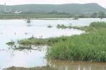 Miles de hectáreas de caña se encuentran inundadas. (Foto: Vicente Brito)