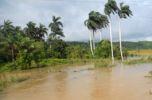 Más de 3 000 hectáreas dedicadas a los cultivos reportan daños. (foto: Oscar Alfonso)