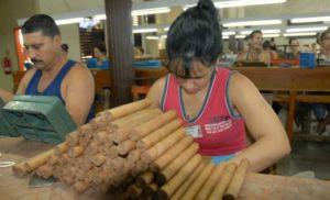 Entre los productos espirituanos de mayor peso para la economía del territorio aparece el tabaco.