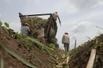 Estas siembras pueden redundar en el aumentó del rendimiento agrícola.