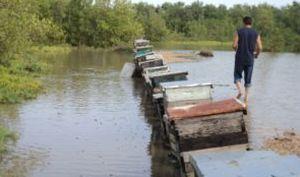 Muchos de los apiarios situados en la costa Sur quedaron inundados.