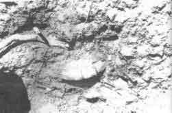 En 1985, durante trabajos de acondicionamiento del terráplen de La Ferrolana a Natividad, en el municipio de La Sierpe, quedó al descubierto un valioso conjunto artefactual aborigen.