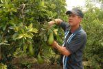 Javier Correa, productor de Regencia Nacional en la Agricultura Urbana.