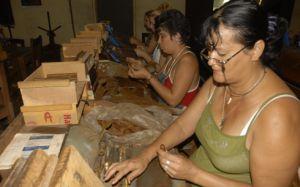 Cada uno de estos trabajadores produce como promedio diario unos 150 tabacos.