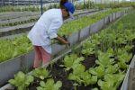 Yaguajay se distingue en la producción de semillas de hortalizas.