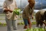 La provincia aspira a fortalecer los cultivos tapados.
