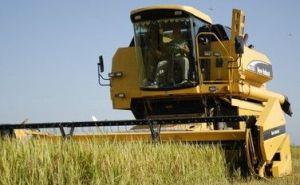 El refuerzo de nuevas combinadas y una mejor organización de la cosecha permiten hoy la recolección diaria de entre 1 000 y 1 200 toneladas del grano.