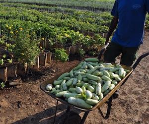 En aras de estimular las producciones agropecuarias y forestales, se estableció a este sector un régimen especial tributario.