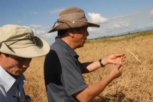 Los asesores vietnamitas reconocen el potencial del país y en particular de la región para el cultivo del arroz.