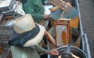 Los apicultores poseen una dotación de utensilios que favorecen la calidad de la miel.