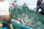 La pesca figura entre los sectores en los que tendrán incidencia las cooperativas.