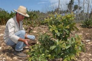 Cuidar el suelo y aplicar la agroecología figuran en la agenda de los técnicos agrícolas y forestales.