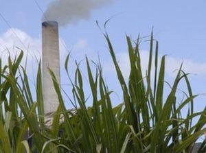 Técnicos azucareros cubanos participarán en Congreso de colegas mexicanos