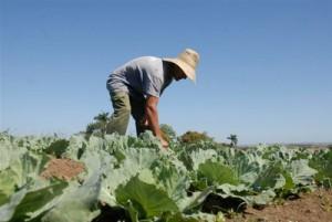 2-El sector agropecuario comienza a pagar tributos por primera vez, con un régimen especial para estimular esas producciones.