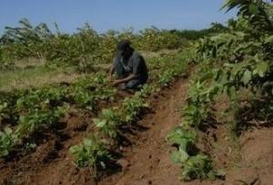 Más de la mitad del terreno solicitado es para cultivos varios y ganadería.