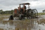 Unas 15 500 hectáreas fueron plantadas en La Sierpe.