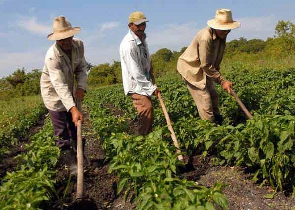 17 de mayo: Día del Campesino cubano