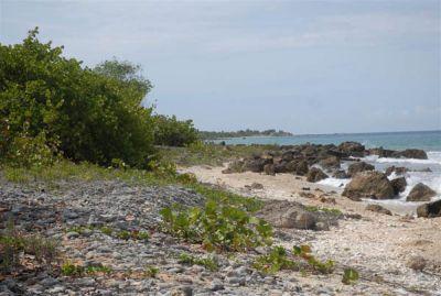Plantas autóctonas retienen la arena e impiden que la acción del mar atente contra la preservación península.