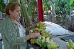 La agricultura de traspatio aporta sus producciones hacia los Consejos Populares.