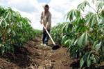 En Cuba se han entregado en usufructo cerca de un millón 540 mil hectáreas.