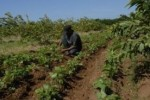 Los documentos permitan a las Cooperativas del sector agrícola mejorar el control y empleo de sus recursos.