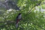 La protección de la biodiversidad constituye un pilar básico en el trabajo de los ambientalistas espirituanos.